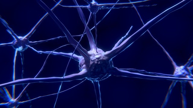 неврони